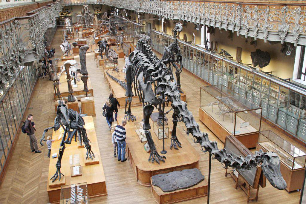 Natural History Museum, natural history museum paris opening times