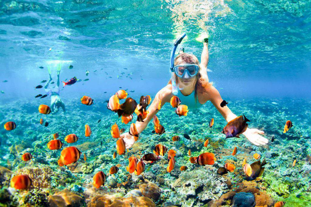snorkeling maui tours, snorkeling maui north shore, snorkeling maui for beginners